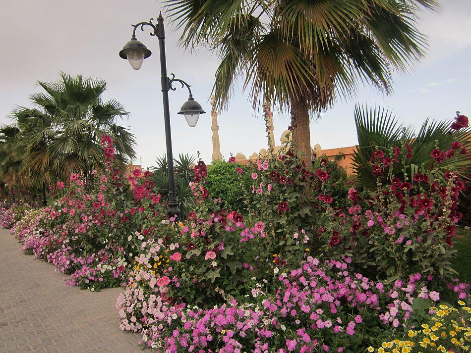 http://l2.yimg.com/bt/api/res/1.2/ex3W0JXzowE19Y0FN9RGzQ--/YXBwaWQ9eW5ld3M7Zmk9aW5zZXQ7aD03MTM7cT04NTt3PTk1MA--/http://l.yimg.com/os/401/2012/05/14/The-flower-decked-Hurghada-Marina-on-a-spring-day-JPG_094930.jpg
