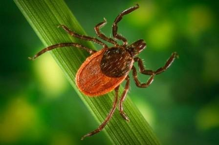 The Clock Is Ticking: Spring Forward for Lyme Disease