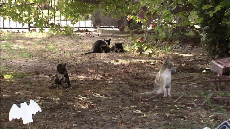 More than 50 cats, dogs seized from Santa Ana home