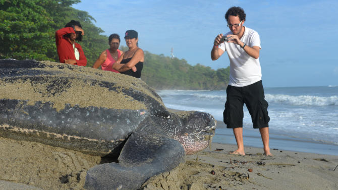In this May 2, 2013 photo, a tourist takes photographs of a leatherback turtle as it heads to the ocean after burying her eggs in the sand at daybreak on a narrow strip of beach in Grande Riviere, Trinidad. Officials with the U.S.-based Sea Turtle Conservancy say Trinidad is now likely the world's leading tourist destination for people to see leatherbacks. (AP Photo/David McFadden)