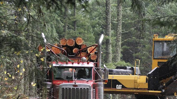 Group challenges timber producer's 'green' label