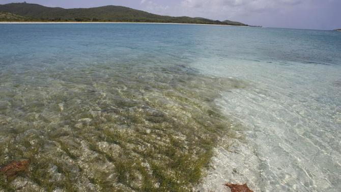 "FILE - In this April 17, 2008 file photo, a sea star lies under clear water along Icacos beach inside the former Vieques Naval Training Range on Vieques island, Puerto Rico. The U.S. Navy departed the Puerto Rican island of Vieques on May 1, 2003 and the cleanup of the bombing range on an island the Navy once called its ""crown jewel"" of live-fire training is expected to take another decade. (AP Photo/Brennan Linsley, File)"