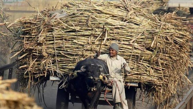 A farmer arrives with his ox cart loaded with sugarcane at a sugar factory in Bagphat in Uttar Pradesh, January 20, 2010. REUTERS/Reinhard Krause/Files