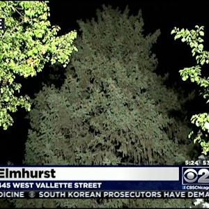 Elmhurst Tree Among Finalists For Chicago's Official Christmas Tree