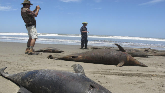In this April 6, 2012 photo, a scientist take photos of dolphin caracasses on the shore of Pimentel Beach in Chiclayo, Peru. Scientists and Peruvian officials are investigating a mass die-off of hundreds of dolphins along the South American country's coast. (AP Photo/Nestor Salvatierra)