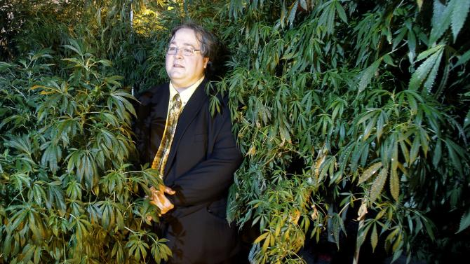 FILE - In this March 28, 2011 file photo, Paul Stanford stands between plants in his marijuana growing facility in Portland, Ore. A well-hyped effort to to legalize marijuana in Oregon has all but fizzled as proponents acknowledge they've been unable to raise raise money.  Wealthy donors who have bankrolled similar measures in Washington and Colorado have sat out the campaign in Oregon. (AP Photo/Rick Bowmer)