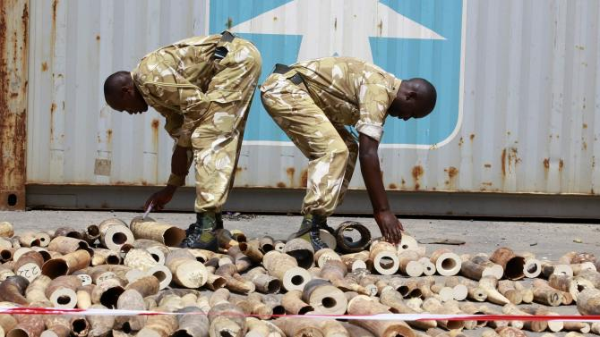 KWS officers count elephant tusks at a container terminal in Mombasa