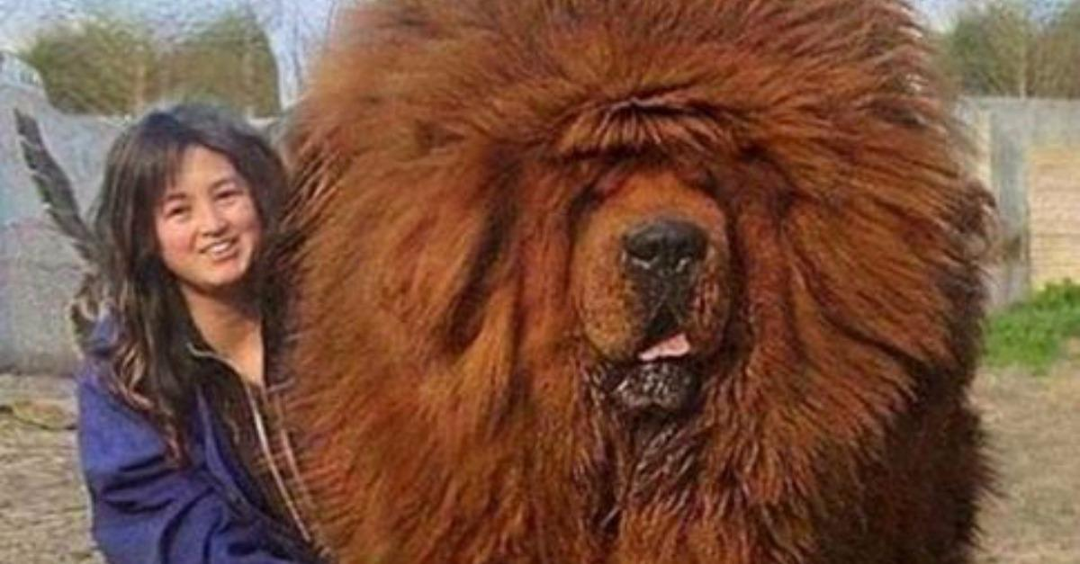 35 Huge Dogs That Will Make Your Jaw Drop