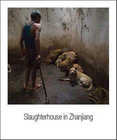 Last Chance for Animals and Animal Equality Expose the Barbaric China Dog Meat Trade