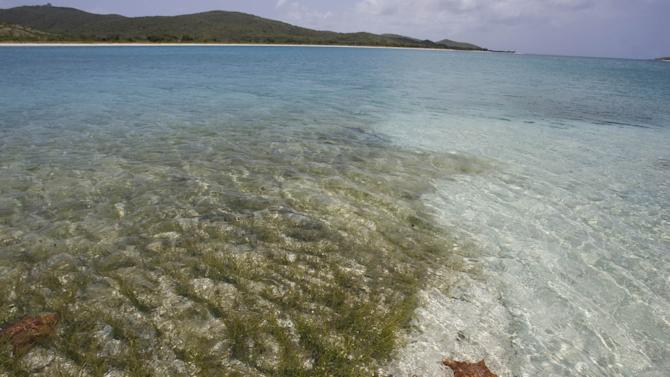 Vieques ponders future 10 years after Navy left