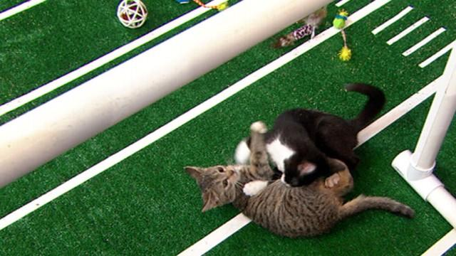 Puppy Bowl 2013 Halftime Show Features Cute Kittens