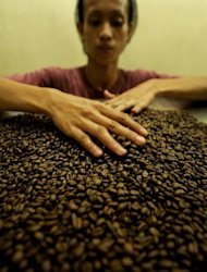 A worker checks roasted coffee beans at a roasting plant in Cavite, 30 kms south of Manila on September 25, 2011