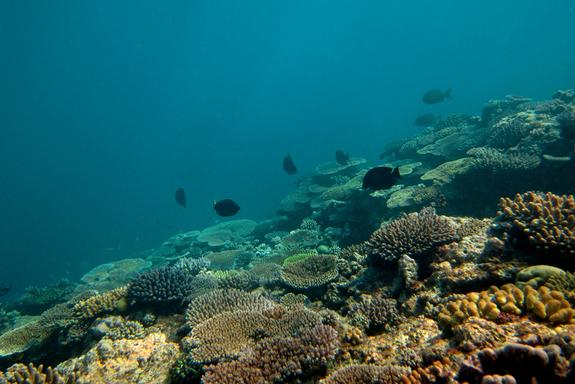 Half of Great Barrier Reef Lost in Past 3 Decades