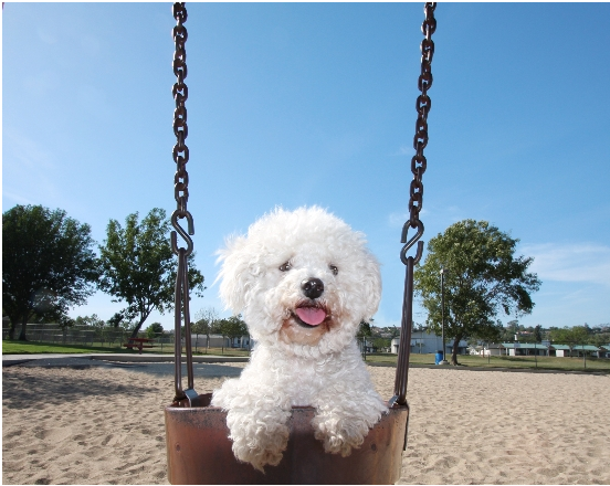 Dog on a Swing on a Beautiful Day