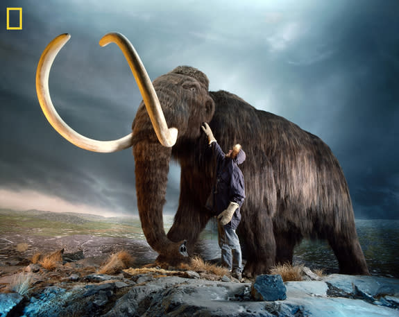 Woolly Mammoth or Thylacine? New Guide Helps Choose Which Species to Resurrect