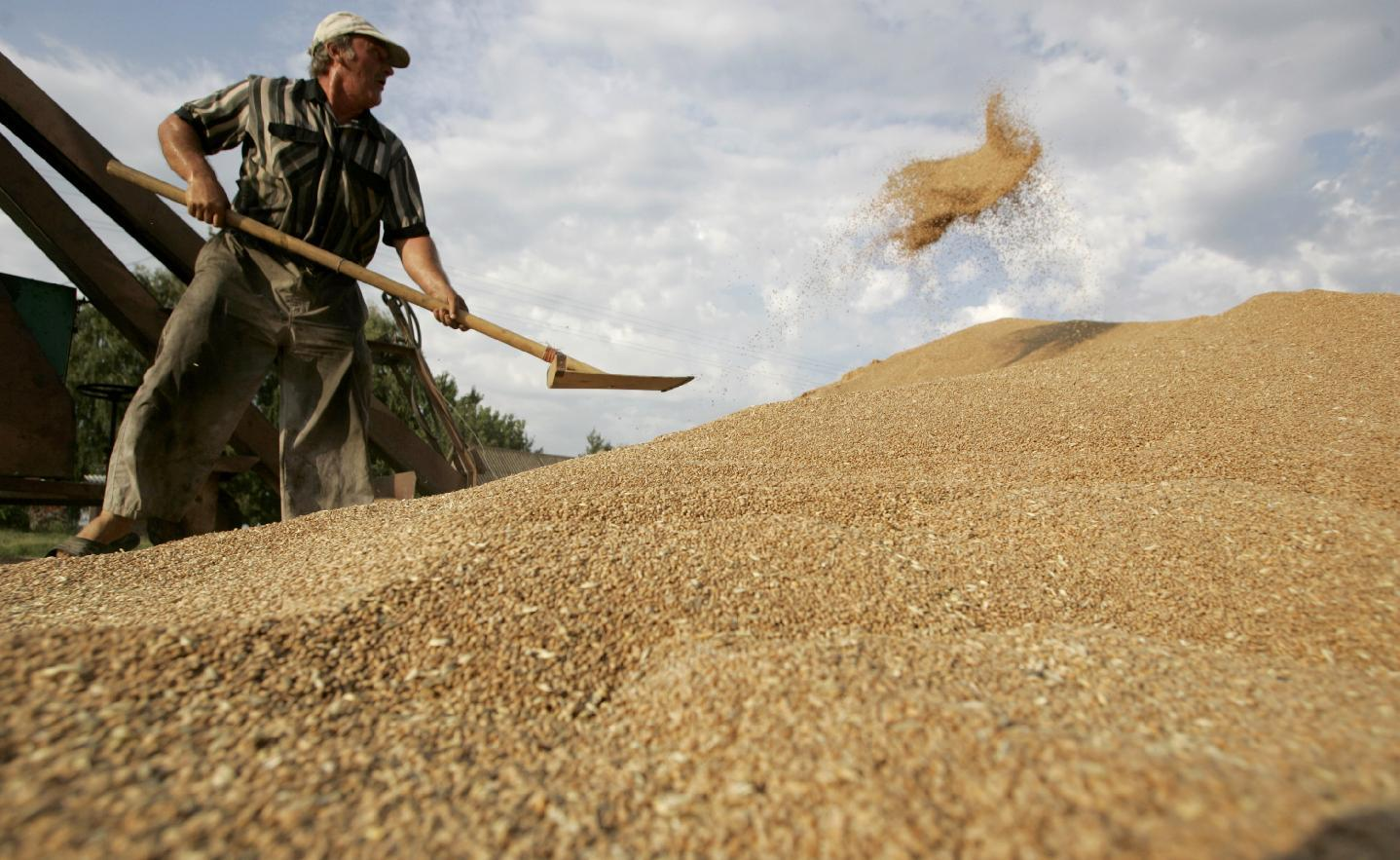 Russia to limit grain exports to keep bread prices down
