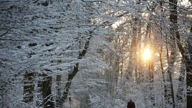 Man walks during sunset through the snow-covered Glienicke Palace forest after the first snow fall in Berlin