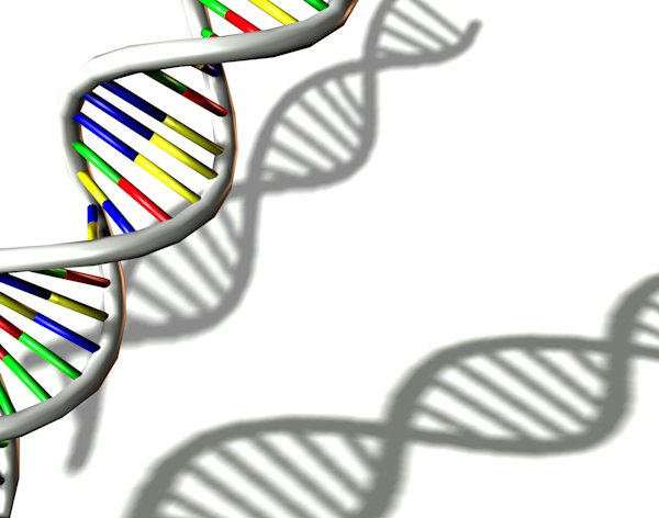 Homosexuality is not passed on in DNA, but via 'epigenetics' according to a new study (Image: Rex)