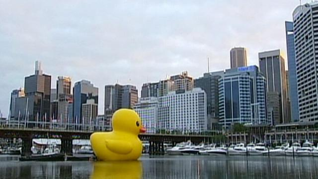 Giant Yellow Duck Takes Test Run In Sydney Harbor