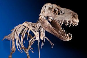 Despite Legal Challenge, Tyrannosaur Sells for $1 million