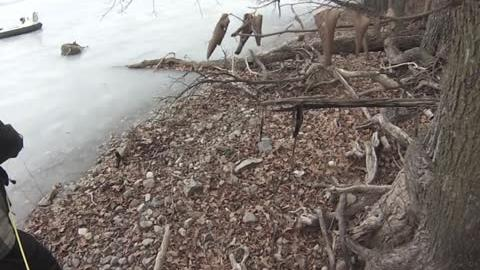 Deer Rescued From Lake