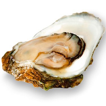 Bob Carter's Brown Oyster …