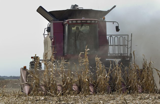 A combine is surrounded by dust at it finishes harvesting a row of corn near Bennington, Neb., Thursday, Sept. 6, 2012. The remnants of Hurricane Isaac dumped heavy rain on some key Midwest farming st