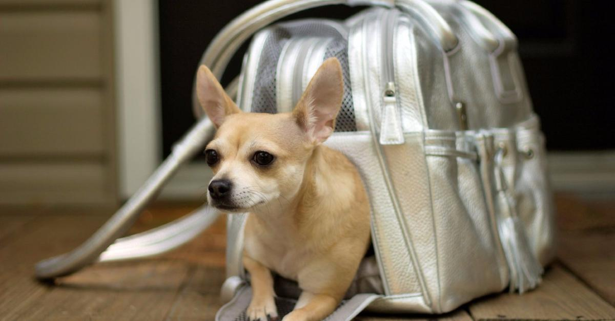 See Great Deals on Dog Carriers Here