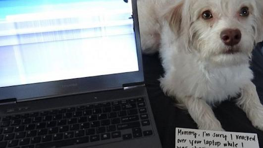 Your Pets Are Responsible For $3B in Gadget Damage