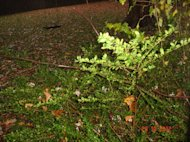 Some of the branches that fell towards our house Hurricane Sandy
