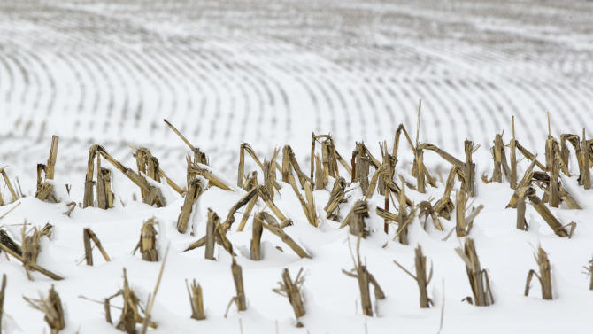 In this Dec. 28, 2012 photo, corn stalks stand in a snowy field near La Vista, Neb. Despite getting some big storms in December, much of the U.S. is still desperate for relief from the nation's longest dry spell in decades. And experts say it will take an absurd amount of snow to ease the woes of farmers and ranchers. (AP Photo/Nati Harnik)