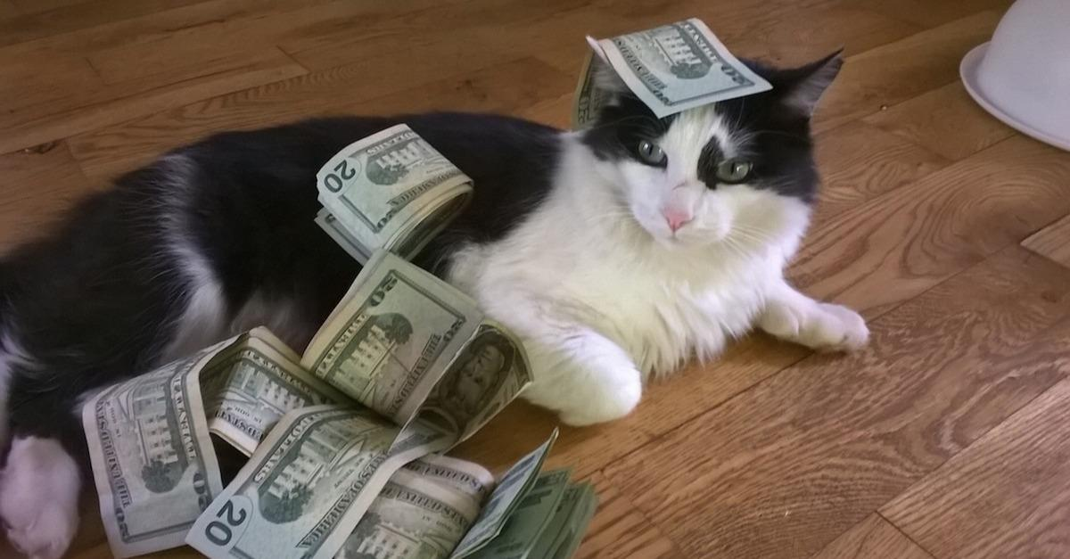 These Cats Are More Successful Than You