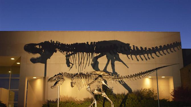"This undated handout photo, taken in 2001, provided by the Museum of the Rockies shows a bronze cast of the Tyrannosaurus rex skeleton known as the Wankel T.rex, in front of the Museum of the Rockies at Montana State University in Bozeman, Mont. The Smithsonian's National Museum of Natural History is acquiring its first full Tyrannosaurus rex skeleton for eventual display in a new dinosaur hall planned for the National Mall. The museum announced Thursday that it reached a 50-year loan agreement with the U.S. Army Corps of Engineers to display one of the most complete T. rex specimens ever discovered. It's known as the ""Wankel T. rex.""The rare fossil was found in 1988 by rancher Kathy Wankel on federal land near the Fort Peck Reservoir in eastern Montana. Between 1990 and 2011, the fossil was loaned to the Museum of the Rockies in Bozeman, Mont. The T. rex will be the centerpiece of a new dinosaur hall scheduled to open in 2019. Only a few museums display such nearly complete skeletons. (AP Photo/Museum of the Rockies)"