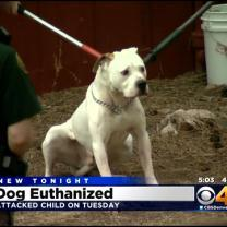 Dog That Attacked 1-Year-Old Has Been Euthanized