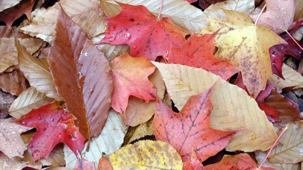 Why Does Fall/Autumn Have Two Names?