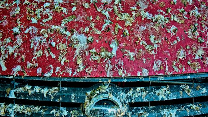 Red is the car colour birds love dropping poop on most