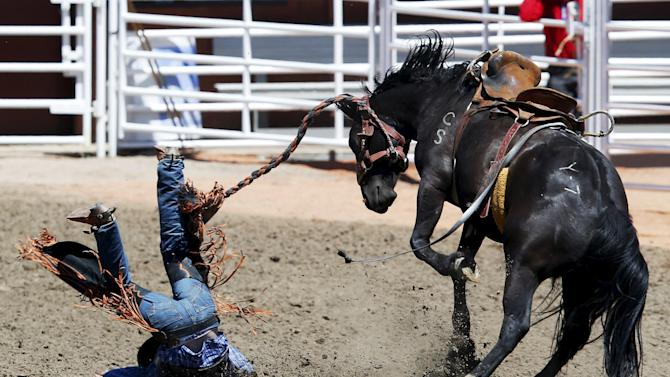 "Kure of Red Deer gets bucked off ""Yodelling Lizard"" in the novice saddle brand event during the Calgary Stampede rodeo in Calgary"