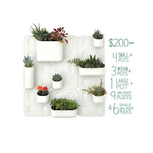 Wall-Mounted Garden
