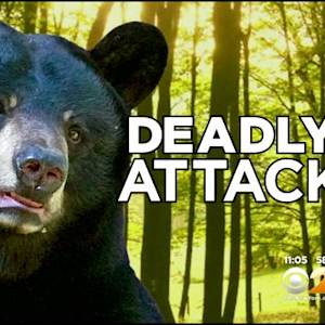 Deadly Bear Attack Has NJ Residents Worried