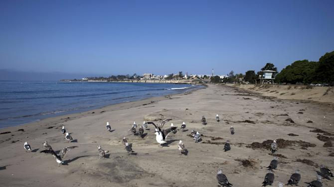 Birds stand on the sand at Goleta Beach Park in Goleta, California