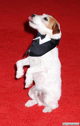 uggie the dog