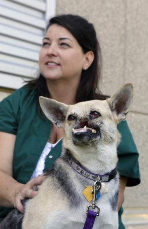 Kabang, a two-year-old injured mixed breed, is photographed with her caregiver Dawn Gillette as she is released from the from the William R. Pritchard Veterinary Medical Teaching Hospital at the University of California, Davis, in Davis, Calif., Monday, June 3, 2013. Kabang lost her snout and upper jaw saving two girls' lives and is heading back to the Philippines after treatment at a California hospital. (AP Photo/Rich Pedroncelli)