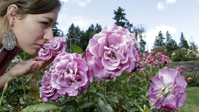 FILE - This July 13, 2010 shows Stephanie Lesire, of Albany, smelling a rose as she walks through the International Rose Test Garden in Portland, Ore. Founded in 1917, Portland's International Rose Test Garden is the oldest official, continuously operated public rose test garden in the United States. (AP Photo/Rick Bowmer, file)