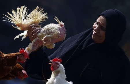 A woman examines a live chicken before buying it on the outskirts of Cairo