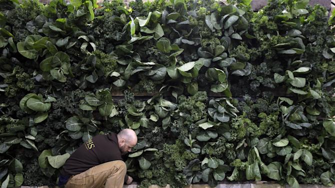 This feb. 28, 2013 photo shows David Elliott preparing a wall made of kale in the Pennsylvania Horticultural Society's installation for the annual Philadelphia Flower Show at the Pennsylvania Convention Center in Philadelphia. More than 270,000 people are expected to converge on the Pennsylvania Convention Center for the event, which runs through March 10. Billed as the world's largest indoor flower show, it's also one of the oldest, dating back to 1829. (AP Photo/Matt Rourke)