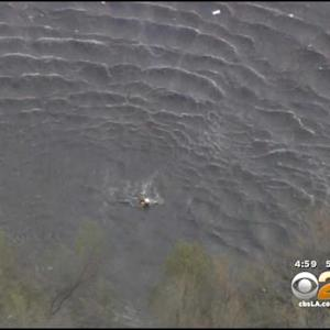 Firefighters Wage Risky Rescue Of Dog In LA River