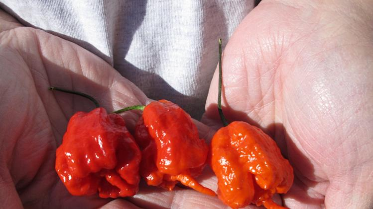 In this Dec. 12, 2013 photo, Ed Currie holds three Carolina Reaper peppers, in Fort Mill, S.C. Last month, The Guinness Book of World Records decided Currie's peppers were the hottest on Earth, ending a more than four-year drive to prove no one grows a more scorching chili. (AP Photo/Jeffrey Collins)