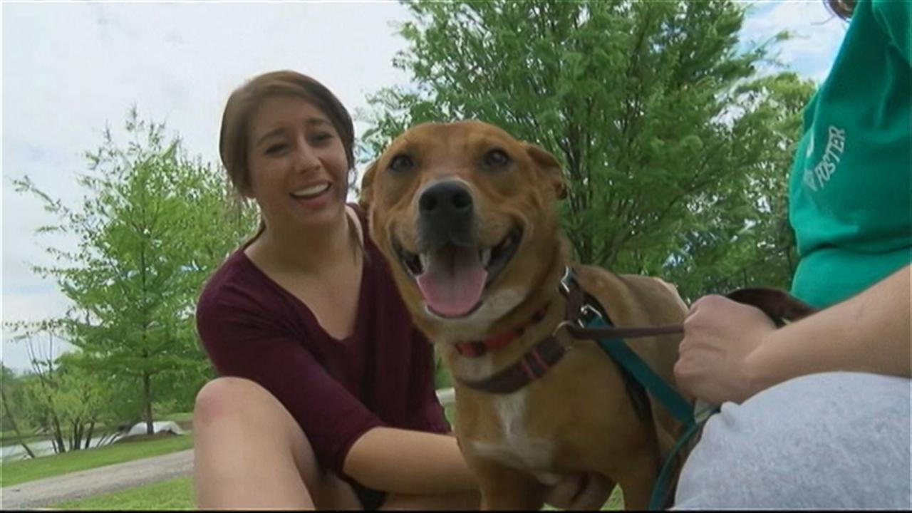 Lost Dog Reunited With Distraught Owner After Multi-City Odyssey