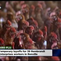 Bird Flu Outbreak Forces Minn. Companies To Cut Jobs