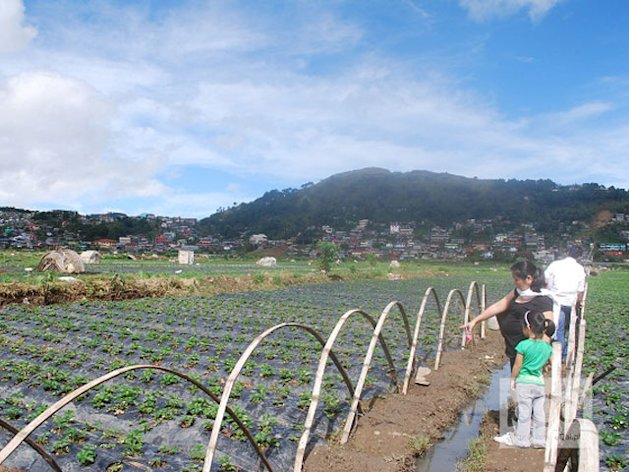La Trinidad in Benguet is best known for its huge strawberry farming community. Local farmers also produce jams, jellies, and juices based on strawberries.